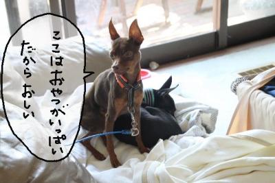 2013_09_23_9999_20.jpg