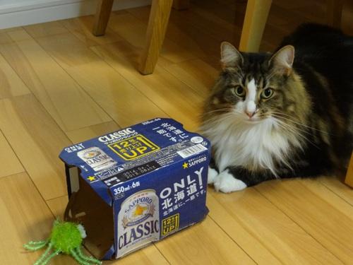 beerpack1.jpg