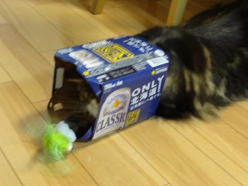 beerpack3.jpg