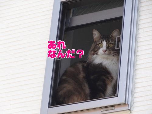 birdcat1_text.jpg