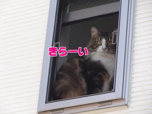 birdcat5_text.jpg