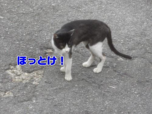birdcat6_text.jpg