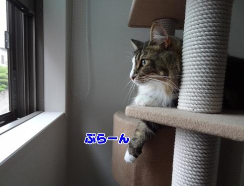 byear5_text.jpg