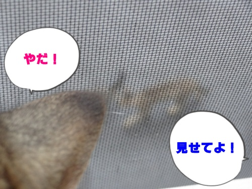 frame4_text.jpg