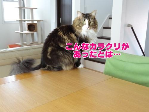 guest3_text.jpg