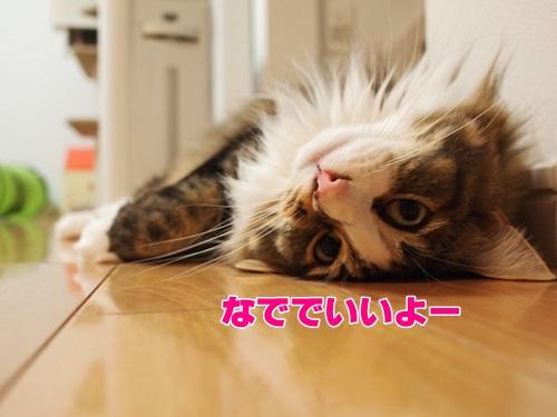neoki4_text.jpg