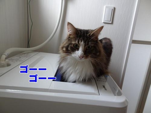 newkitten1_text.jpg