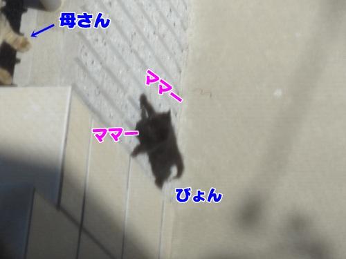 newkitten3_text.jpg