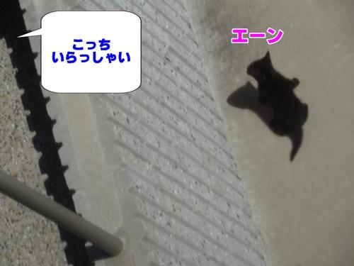 newkitten4_text.jpg