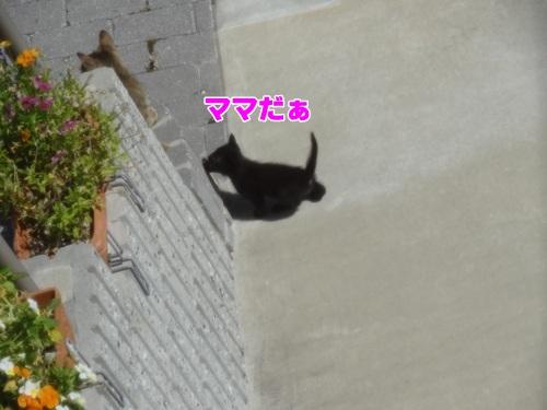 newkitten5_text.jpg