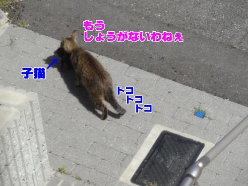 newkitten6_text.jpg
