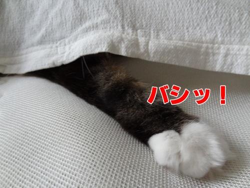 sheet4_text.jpg