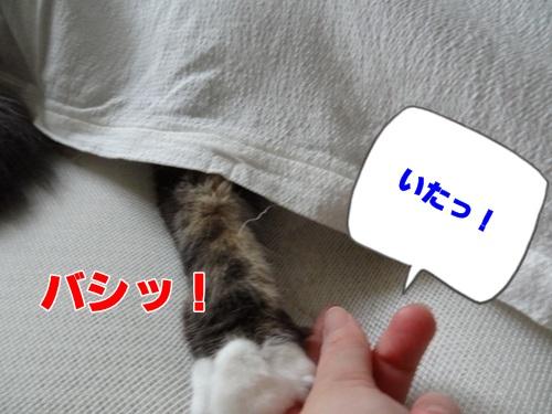 sheet6_text.jpg