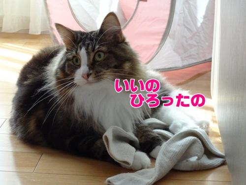 socks2_text.jpg