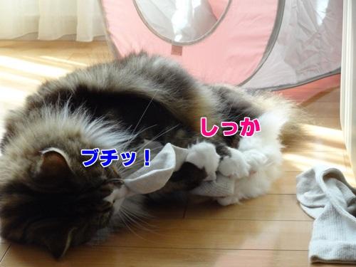socks7_text.jpg