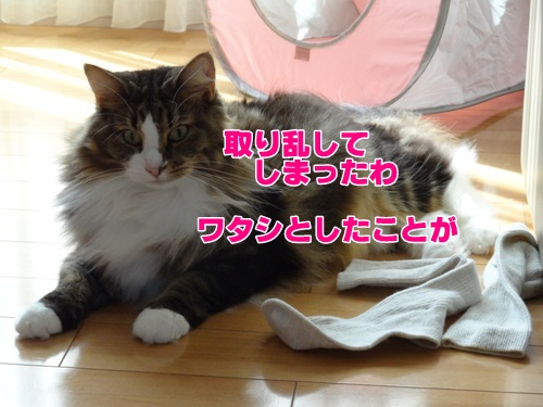 socks8_text.jpg