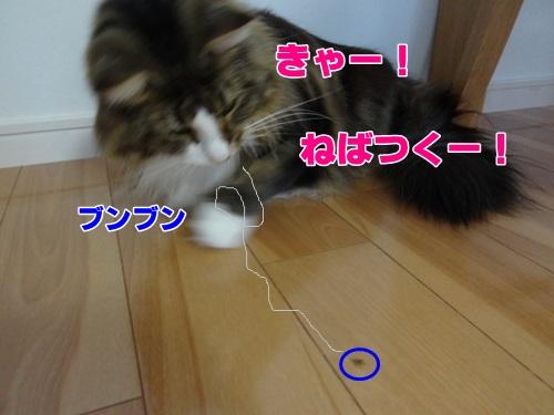 spider4_text.jpg