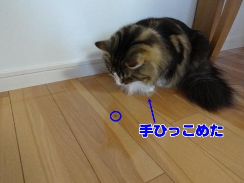 spider5_text.jpg