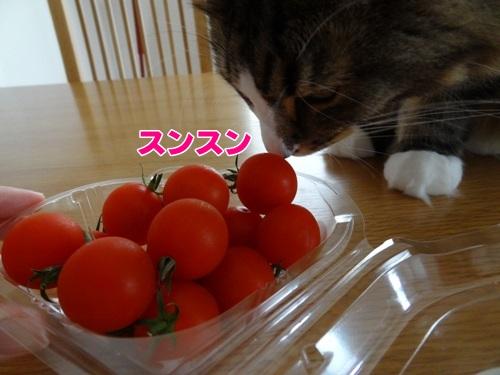 tomato2_text.jpg