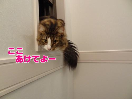 typhoon4_text.jpg