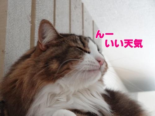 typhoon6_text.jpg