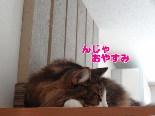 typhoon7_text.jpg