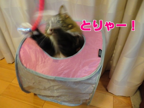 typhoon8_text.jpg
