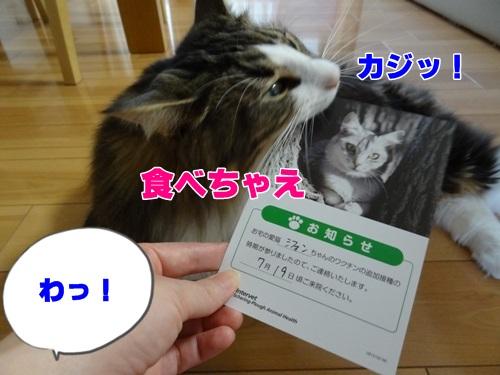 vaccine20134_text.jpg