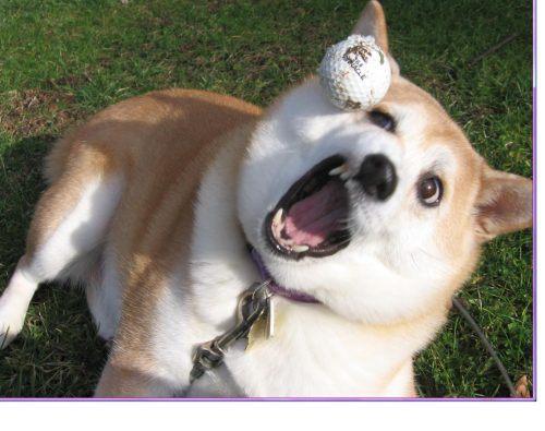 animals-funny-goofy-interesting-14.jpg