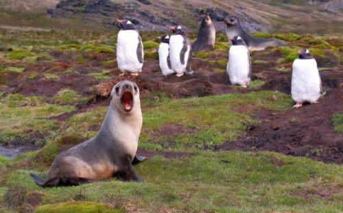 animals-funny-goofy-interesting-17.jpg