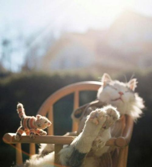 animals-funny-goofy-interesting-21.jpg