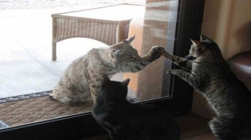 animals-funny-goofy-interesting-24.jpg