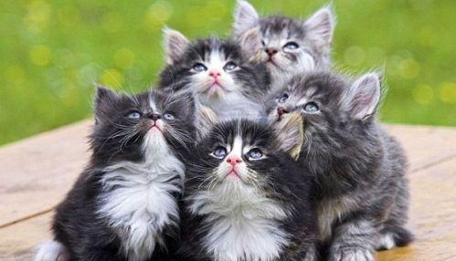 cat-saturday-110_20131110151424cf6.jpg