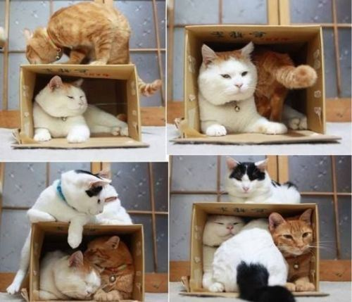 cat-saturday-213_20131110151518e1d.jpg