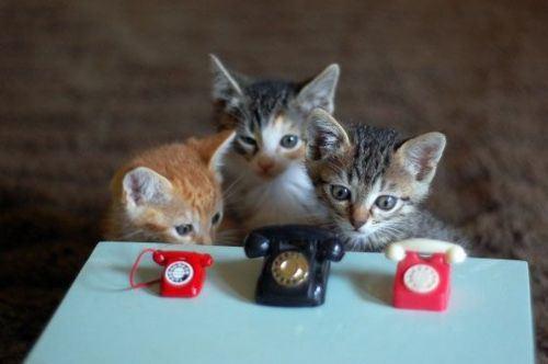 cat-saturday-243_20131117151126713.jpg