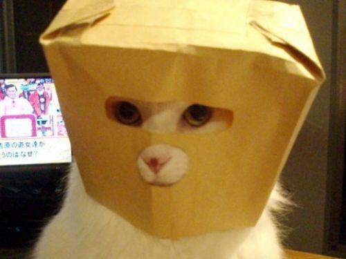 cat-saturday-26_20131125112110dd7.jpg