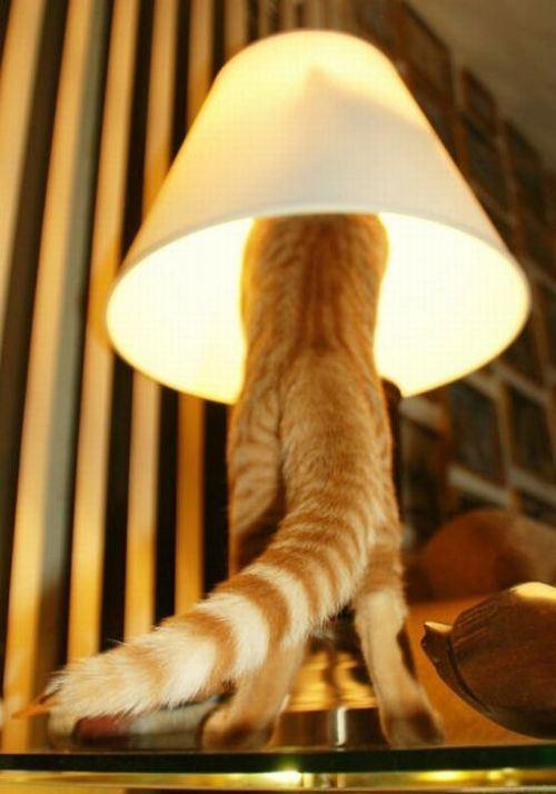 cat-saturday-37_20131117150900ca1.jpg