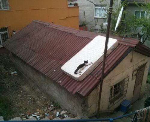 cat-saturday-62_2013111015140655c.jpg