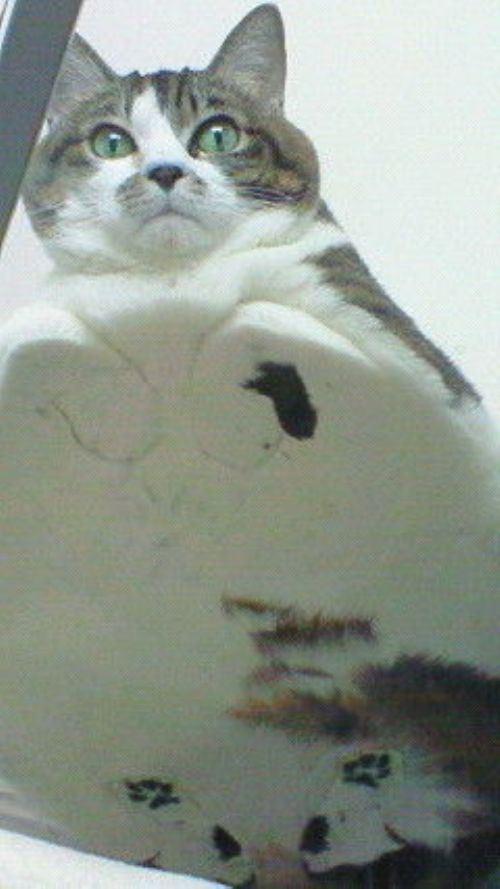 cat-saturday-72_20131110151422948.jpg