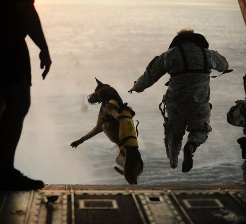 dogs-war-920-33.jpg