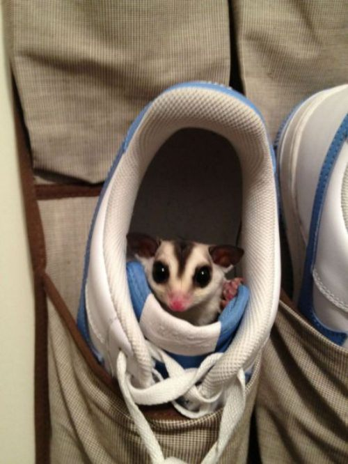 funny-awesome-animals-0_201311071110041c3.jpg