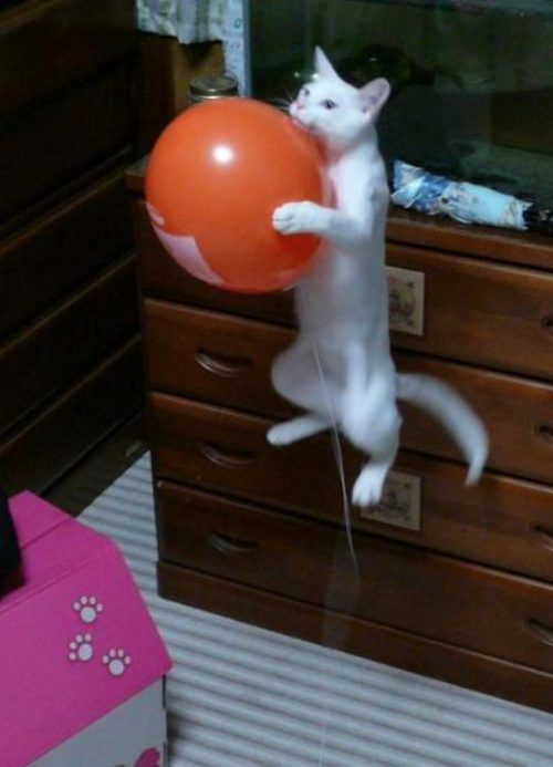 funny-awesome-animals-12_2013110711153482b.jpg