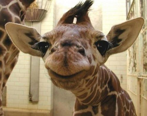 funny-awesome-animals-3_20131107111512869.jpg