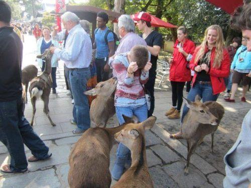 funny-awesome-animals-9_20131107111529c1e.jpg