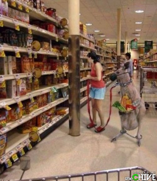 funny-grocery-store-photos-5.jpg