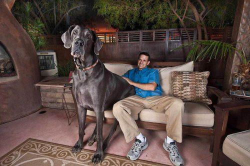 giant-george-worlds-tallest-dog-12.jpg