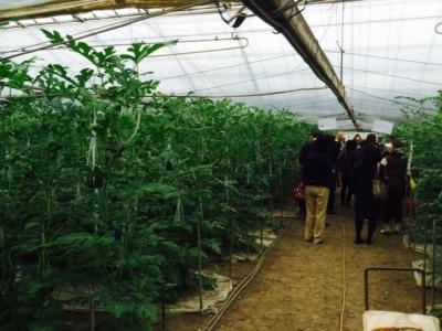 スイカ農園