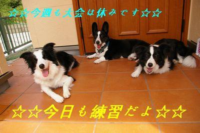 20130721rinaiyu001.jpg