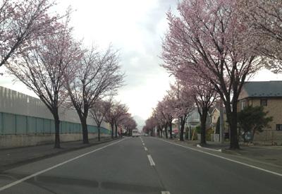 みたけ桜3