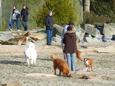 カナダ生活 犬の公園 (400x300)